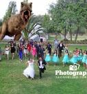boda-montaje-dinosario-en-quito-127x137 Galería